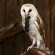 Barn Owl With Catch Of The Day Print by Inspired Nature Photography Fine Art Photography
