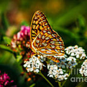 Beautiful Butterfly Print by Robert Bales