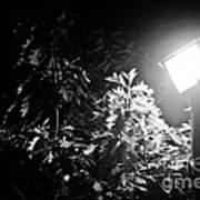 Beautiful Lamp Light In The Dark Print by Fatemeh Azadbakht