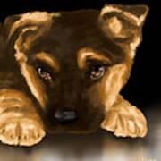 Beautiful Puppy Print by Veronica Minozzi