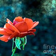 Beautiful Red Rose Print by Robert Bales