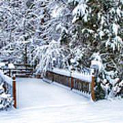 Beauty Of Winter Print by Kathy Jennings