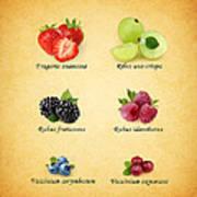 Berry Print by Mark Rogan