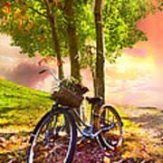 Bicycle Under The Tree Print by Debra and Dave Vanderlaan