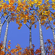 Birch Grove Print by Cynthia Decker