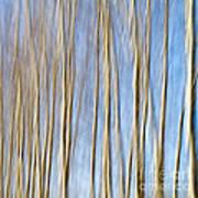 Birch Trees Print by Stelios Kleanthous