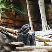 Bird - National Aquarium In Baltimore Md - 12129 Print by DC Photographer
