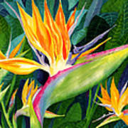 Bird-of-paradise Print by Janis Grau