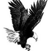 Black And White With Pen And Ink Drawing Of American Bald Eagle  Print by Mario Perez