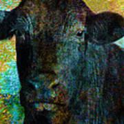 Black Angus Print by Ann Powell