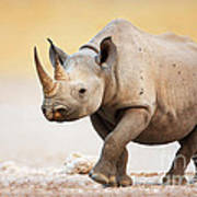 Black Rhinoceros Print by Johan Swanepoel