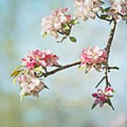Blossom Branch Print by Kim Hojnacki