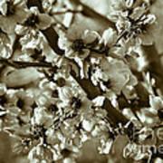 Blossoms Print by Frank Tschakert
