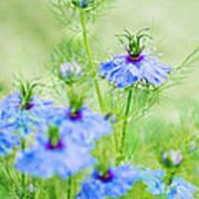 Blue Flowers Print by Diana Kraleva