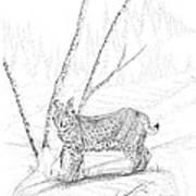 Bobcat Print by Carl Genovese