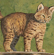 Bobcat Kitten Print by Crista Forest