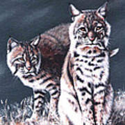 Bobcats In The Hood Print by DiDi Higginbotham