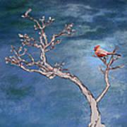 Bonsai Cardinal Print by John Haldane