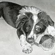 Border Collie Puppy Print by Sarah Batalka