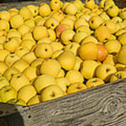 Box Of Golden Apples Print by Garry Gay