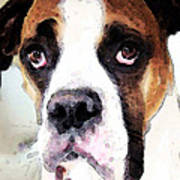 Boxer Art - Sad Eyes Print by Sharon Cummings