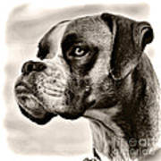 Boxer Profile Print by Lana Trussell