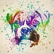 Boxer Splash Print by Aged Pixel