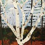 Brightest Birch Print by Suzanne  Marie Leclair