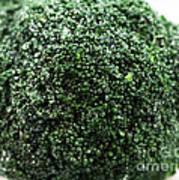 Broccoli Print by John Rizzuto