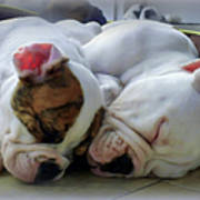 Bulldog Bliss Print by Karen Wiles