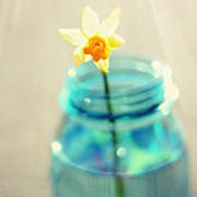 Buttercup Photography - Flower In A Mason Jar - Daffodil Photography - Aqua Blue Yellow Wall Art  Print by Amy Tyler