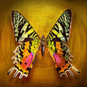 Butterfly - Butterfly Of Happiness  Print by Mike Savad