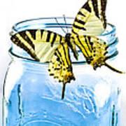 Butterfly On A Blue Jar Print by Bob Orsillo