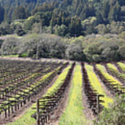 California Vineyards In Late Winter Just Before The Bloom 5d22051 Print by Wingsdomain Art and Photography