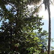 Caribbean Cruise - Dominica - 1212139 Print by DC Photographer