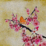 Cherry Blossoms Print by Cheryl Young