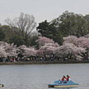 Cherry Blossoms - Washington Dc - 011315 Print by DC Photographer