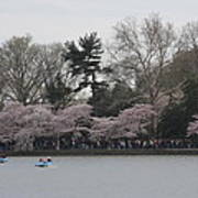 Cherry Blossoms - Washington Dc - 011317 Print by DC Photographer
