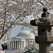 Cherry Blossoms With Jefferson Memorial - Washington Dc - 011326 Print by DC Photographer