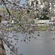 Cherry Blossoms With Jefferson Memorial - Washington Dc - 011336 Print by DC Photographer