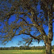 Chickamauga Battlefield Print by Mountain Dreams