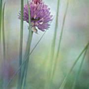Chive Garden Print by Priska Wettstein