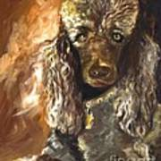 Chocolate Poodle Print by Susan A Becker