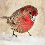 Christmas Card 9 Print by Betty LaRue