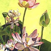 Citron Lotus 1 Print by Debbie DeWitt