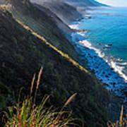 Cliff Grass At Big Sur Print by Adam Pender