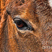 Close Up Of A Horse Eye Print by Paul Ward