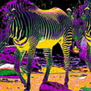 Colourful Zebras  Print by Aidan Moran