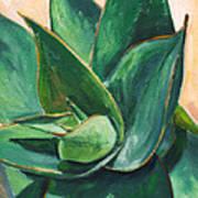 Coral Aloe 3 Print by Athena Mantle