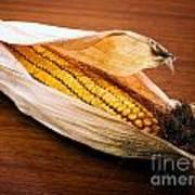 Corn Ear Print by Sinisa Botas